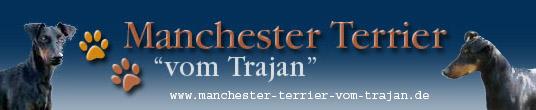 Hundezucht Manchester-Terrier vom Trajan